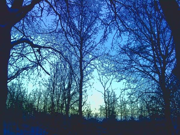 Vinterskogiblått