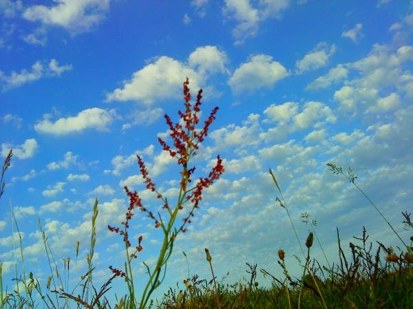H Carlberg - Flowers in the sky