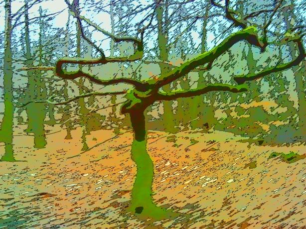 Bokträd foto Håkan Carlberg