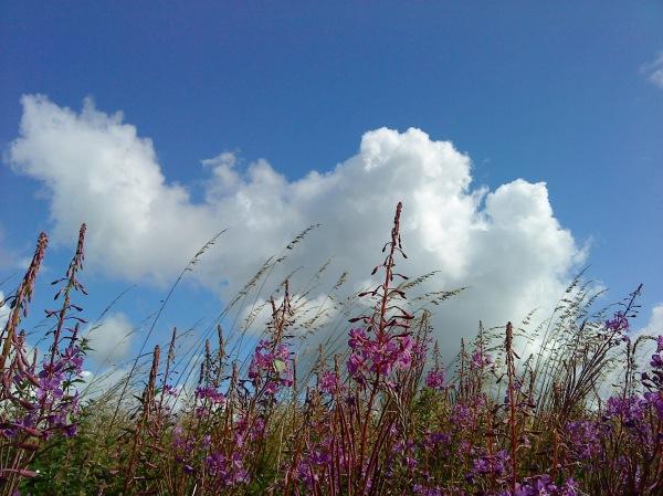 Himmel växter moln HCG 2012