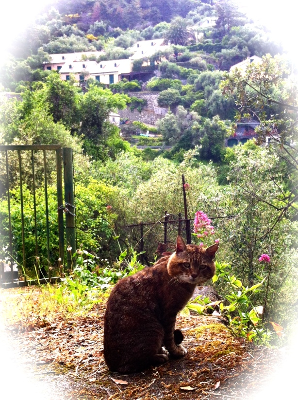 Katt i Ligurien HCG2013