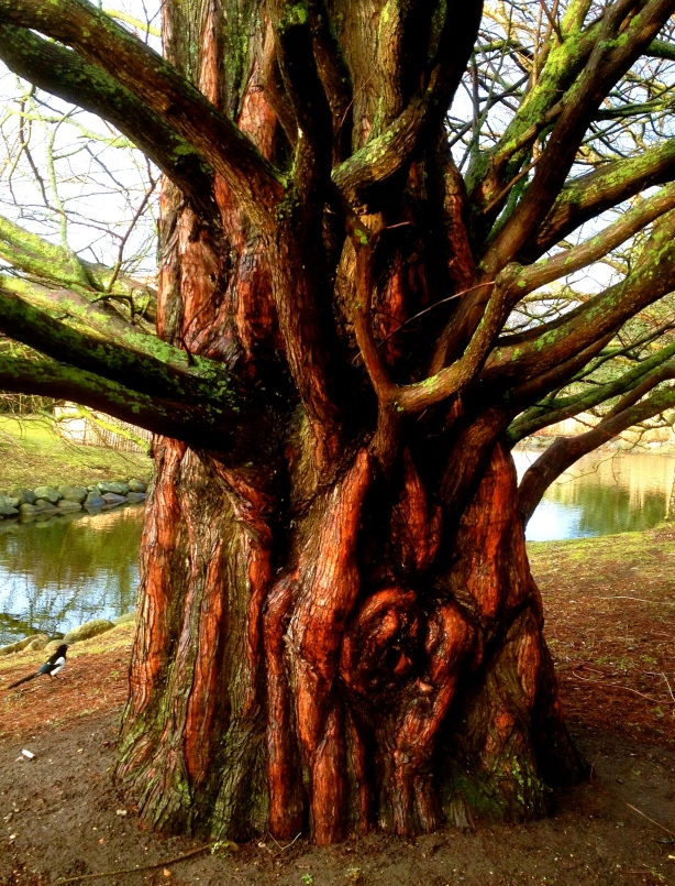 Träd H Carlberg