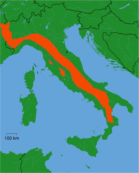 Lupo Italiano