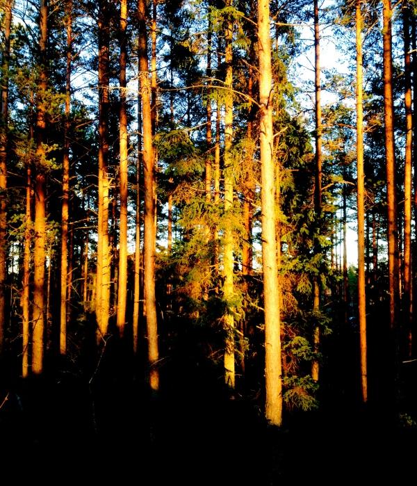 Bomhus, Gävle , Sweden