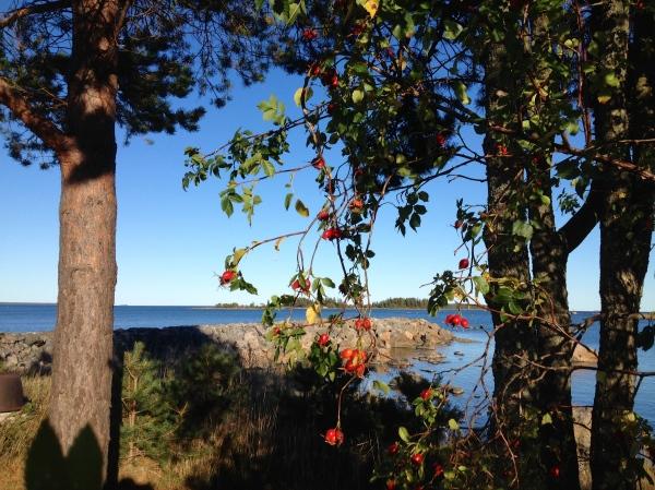 Vid havet H Carlberg