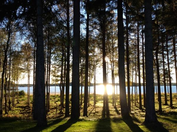 Skog i sol H Carlberg